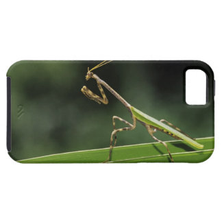 Mantid, Mantidae, adult on palm frond, The Inn iPhone 5 Cover