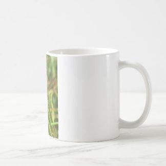 Mantis 8482 mugs