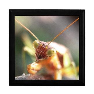 Mantis Up Close Trinket Box