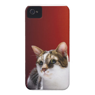 Manx cat iPhone 4 cases