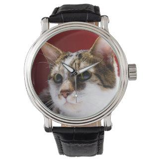 Manx cat watch