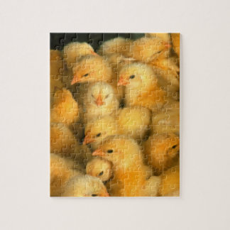 Many Baby Chicks Chickens Jigsaw Puzzle