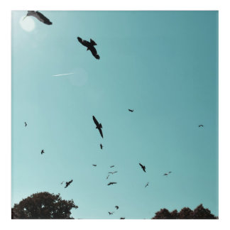 Many birds and a contrail acrylic print