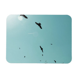 Many birds and a contrail magnet