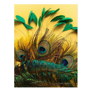 Many different kinds of feathers on a yellow postcard