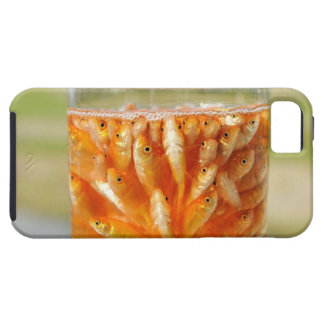 Many goldfish which are in the glass container iPhone 5 case