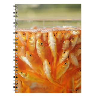 Many goldfish which are in the glass container notebook