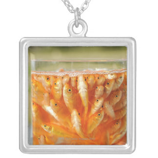 Many goldfish which are in the glass container silver plated necklace