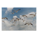 Many Seagulls Poster