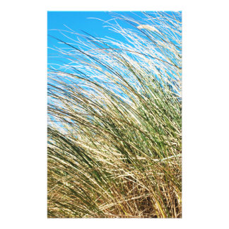Manzanita Beach Grasses, Coastal Nature Full Color Flyer