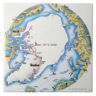 Map of Arctic Tile
