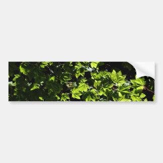 Maple Bush Bumper Sticker