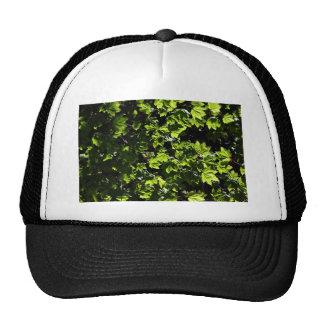 Maple Bush Mesh Hat