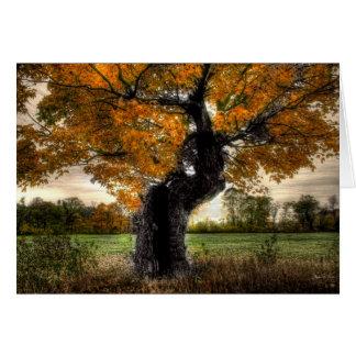Maple Giant: card