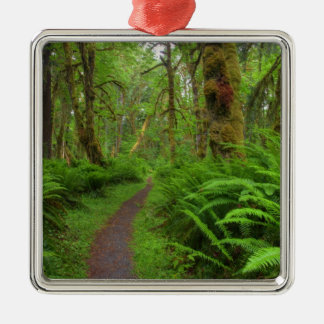 Maple Glade trail, ferns and moss covered Christmas Ornament