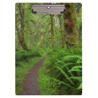 Maple Glade trail, ferns and moss covered Clipboard