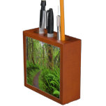 Maple Glade trail, ferns and moss covered Pencil Holder