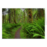 Maple Glade trail, ferns and moss covered Greeting Card