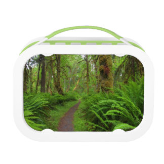 Maple Glade trail, ferns and moss covered Lunch Box