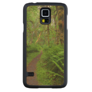 Maple Glade trail, ferns and moss covered Maple Galaxy S5 Slim Case