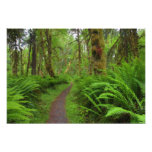 Maple Glade trail, ferns and moss covered Photo