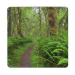 Maple Glade trail, ferns and moss covered Puzzle Coaster