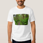 Maple Glade trail, ferns and moss covered T-shirts