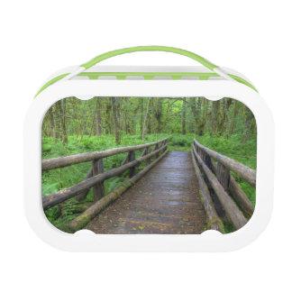 Maple Glade trail wooden bridge, ferns and Lunchbox
