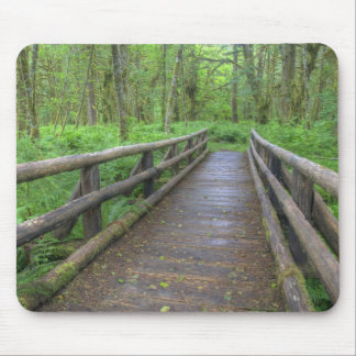 Maple Glade trail wooden bridge, ferns and Mouse Mat