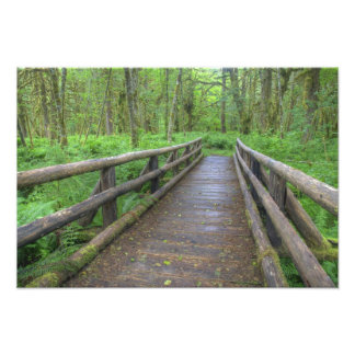 Maple Glade trail wooden bridge ferns and Photograph