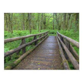 Maple Glade trail wooden bridge, ferns and Postcard