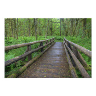 Maple Glade trail wooden bridge, ferns and Poster