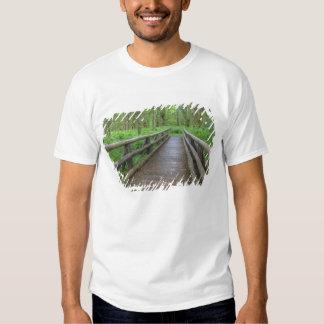 Maple Glade trail wooden bridge, ferns and Shirts