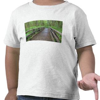 Maple Glade trail wooden bridge, ferns and T-shirt
