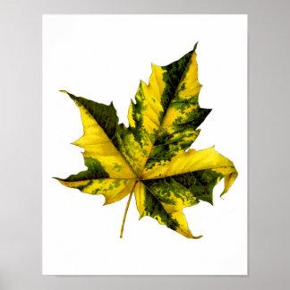 Maple leaf Fall decor foliage art print no.2