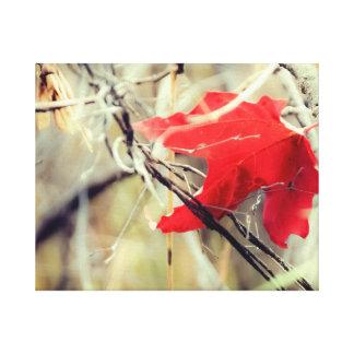 Maple Leaf Fall Photo Canvas Print