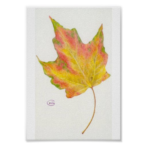 Maple Leaf in Autumn Colors Yellow and Gold Poster