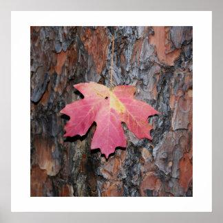 Maple Leaf on Bark Poster