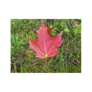 Maple Leaf on Grass-Canada Day Wood Poster