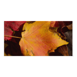 Maple Leaf Custom Photo Card