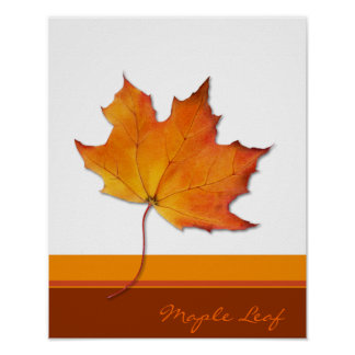 Maple Leaf Poster