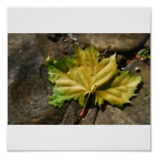 Maple Leaf Poster/Print