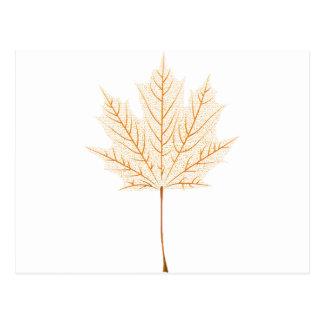 Maple leaf skeleton postcard