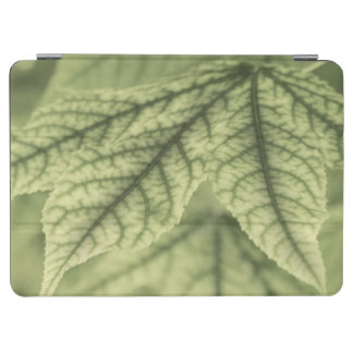 Maple Leaf Vein Patterns iPad Air Cover