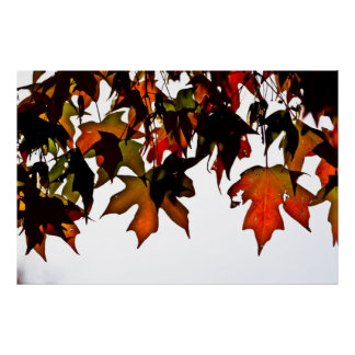 Maple Leaves Autumn Glow Poster Print