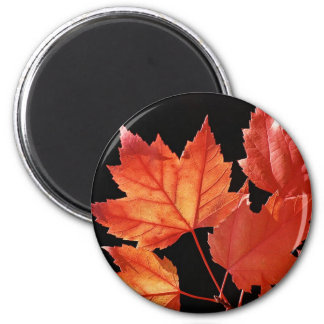 Maple Leaves Fridge Magnet