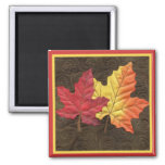 Maple Leaves in Fall Square Magnet