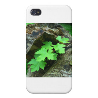 Maple Leaves Cover For iPhone 4