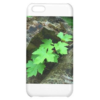 Maple Leaves iPhone 5C Cases