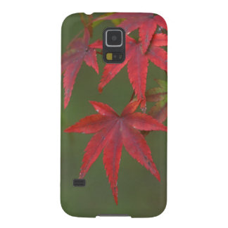 Maple Leaves, Katsura, Kyoto, Japan Galaxy S5 Cover
